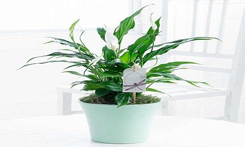 Des plantes fraiches pour se sentir