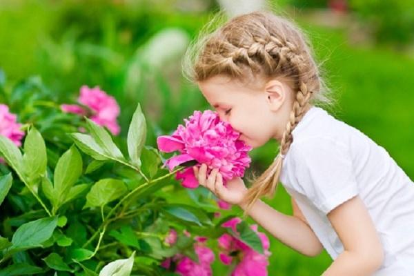Evitez les fleurs parfumees