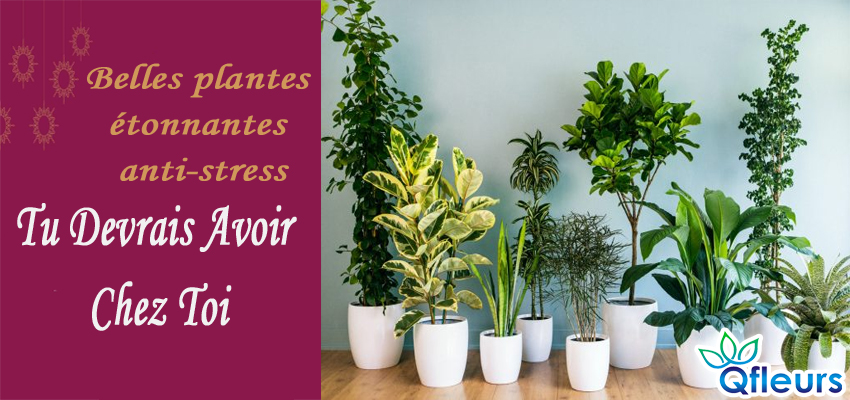 beautiful amazing strees buster house plants