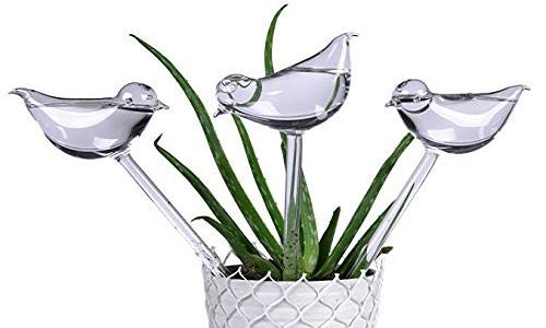 Globes d'arrosage des plantes