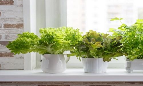 Planteur d'herbes de cuisine