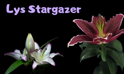 Lys Stargazer