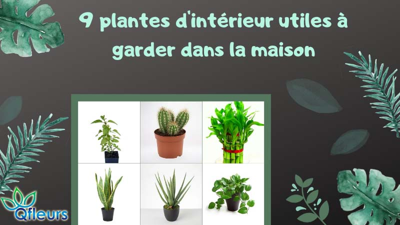 9 plantes d'intérieur utiles à garder dans la maison