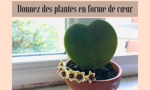 Donnez des plantes en forme de cœur