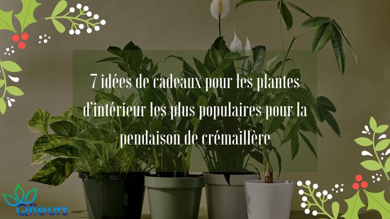 7 idées de cadeaux pour les plantes d'intérieur les plus populaires pour la pendaison de crémaillère