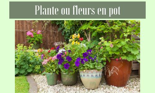 Plante ou fleurs en pot
