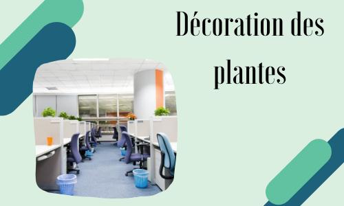 Décoration des plantes