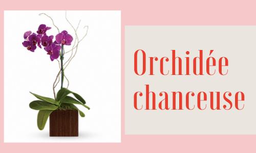 Orchidée chanceuse