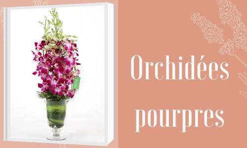 Orchidées pourpres