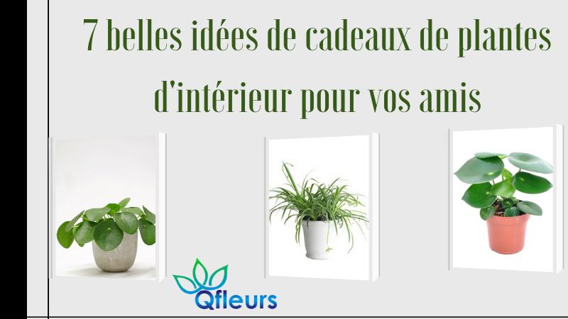 7 belles idées de cadeaux de plantes d'intérieur pour vos amis