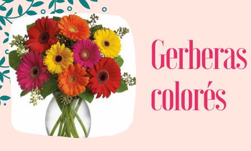 Gerberas colorés