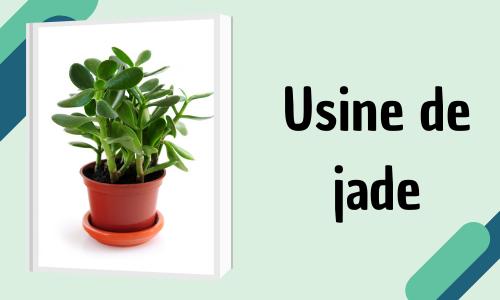 Usine de jade