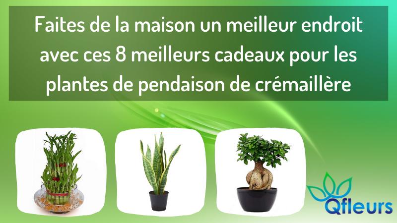 Faites de la maison un meilleur endroit avec ces 8 meilleurs cadeaux pour les plantes de pendaison de crémaillère