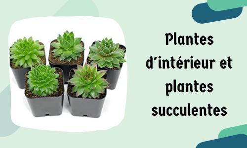 Plantes d'intérieur et plantes succulentes