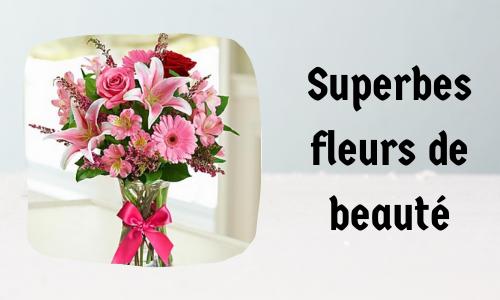 Superbes fleurs de beauté