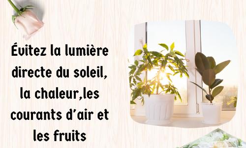Évitez la lumière directe du soleil, la chaleur, les courants d'air et les fruits