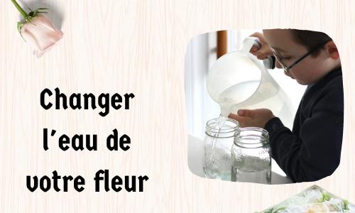 Changer l'eau de votre fleur