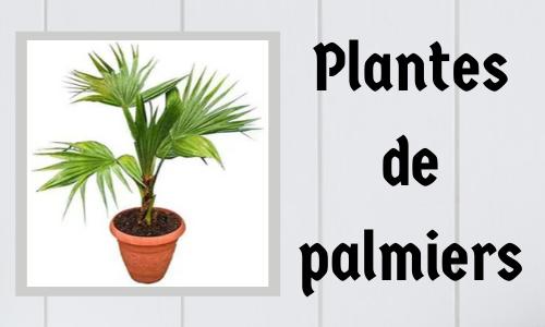 Plantes de palmiers