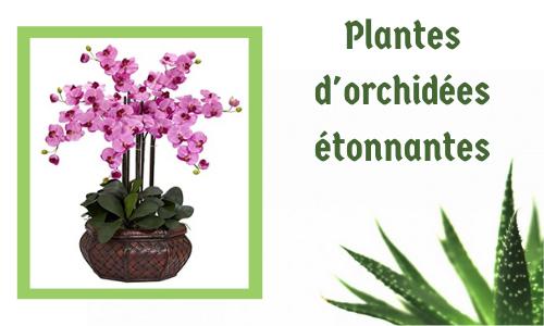 Plantes d'orchidées étonnantes
