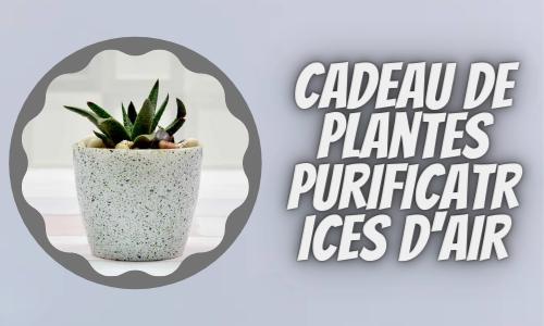 Cadeau de plantes purificatrices d'air