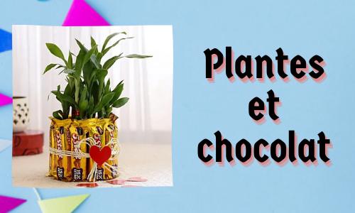 Plantes et chocolat