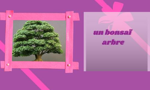un bonsaï arbre