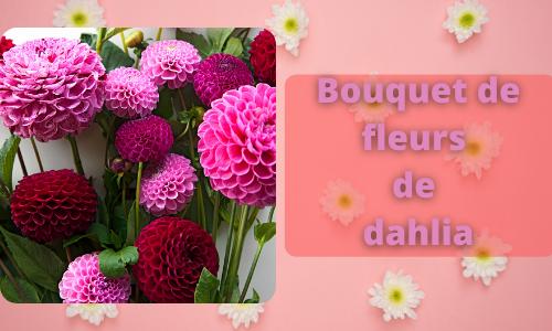 Bouquet de fleurs de dahlia
