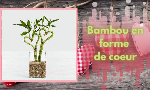 Bambou en forme de coeur