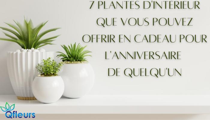 7 plantes d'intérieur que vous pouvez offrir en cadeau pour l'anniversaire de quelqu'un