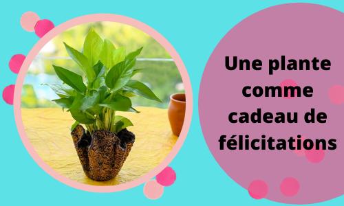 Une plante comme cadeau de félicitations