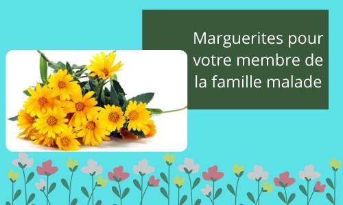 Marguerites pour un membre de votre famille malade