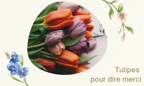 Tulipes pour dire merci