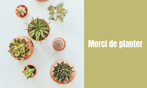 Merci de planter