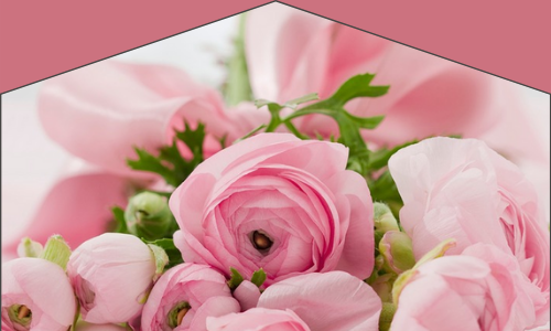 Les fleurs qu'elle aime le plus