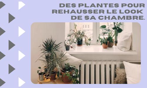 Des plantes pour rehausser le look de sa chambre.