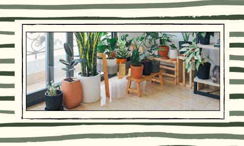 Les plantes peuvent être offertes pour toutes les occasions
