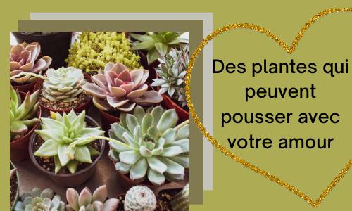 Des plantes qui peuvent pousser avec votre amour