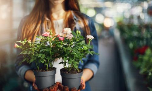 Plantes d'intérieur pour femme amoureuse de la nature