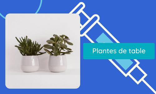 Plantes de table