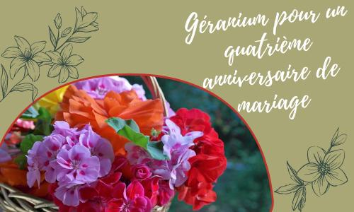 Géranium pour un quatrième anniversaire de mariage