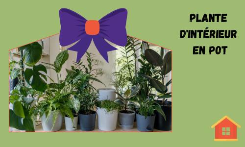 Plante d'intérieur en pot