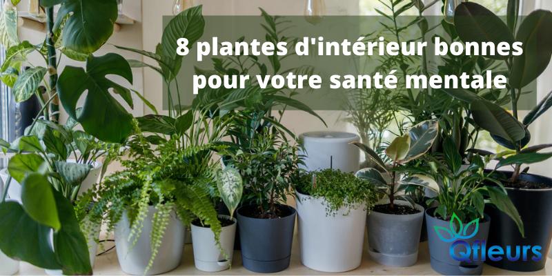 8 plantes d'intérieur bonnes pour votre santé mentale
