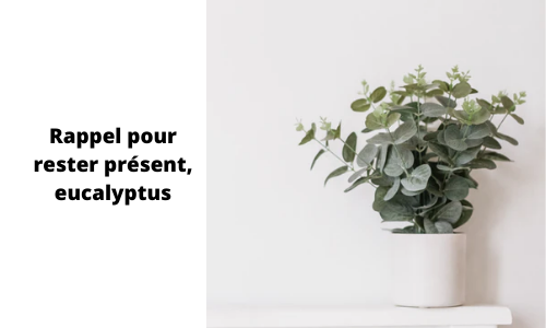 Rappel pour rester présent, eucalyptus