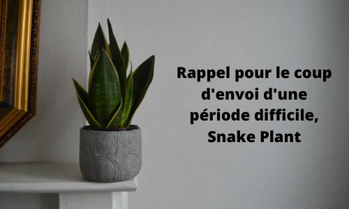Rappel pour le coup d'envoi d'une période difficile, Snake Plant