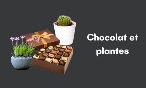 Chocolat et plantes