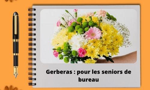 Gerberas : pour les seniors de bureau